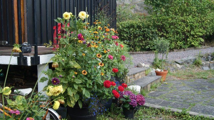 plantas jardins flores:flores jardin – Blog Lysa Flores