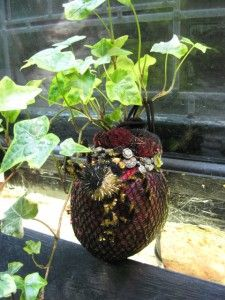 sofpot plantas