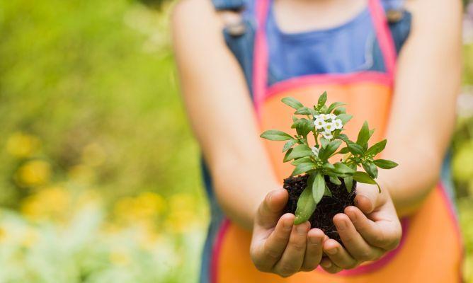 Disfrutar de las flores con ni os blog lysa flores - Con las manos en tu casa ...