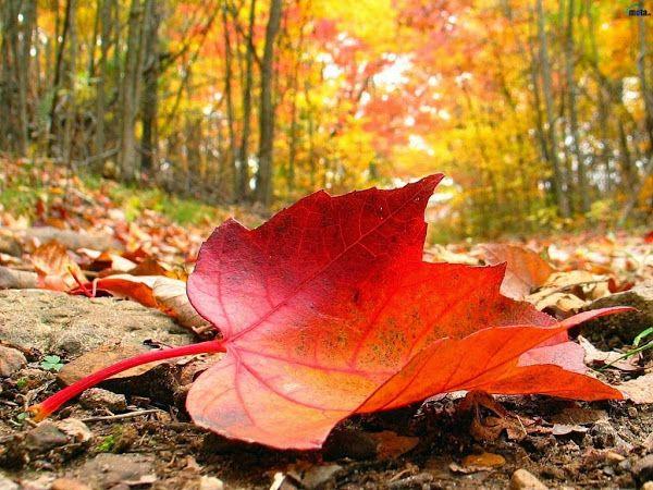 caida-hojas