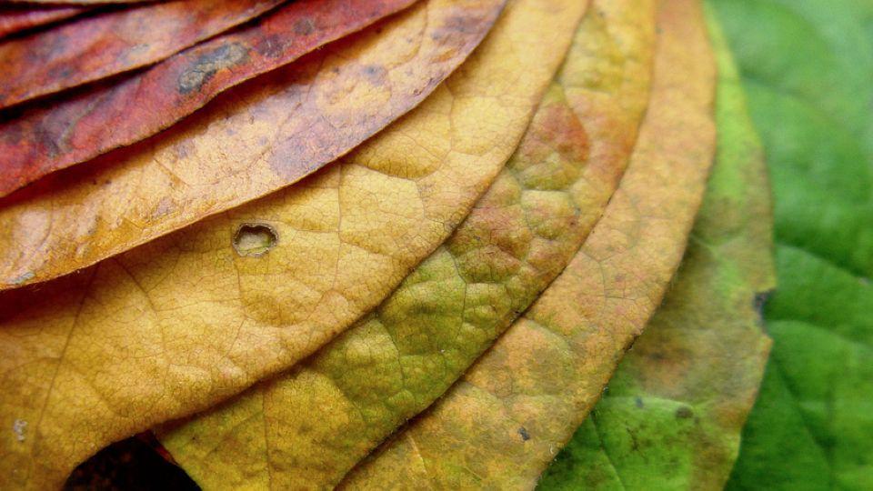 colores-hojas