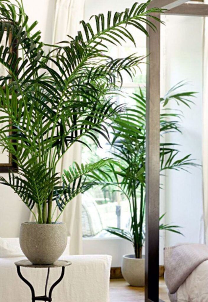 Planta kentia decoracion interior blog lysa flores for Plantas de interior precios