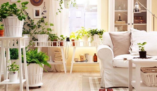 comprar-plantas-flores-de-interior