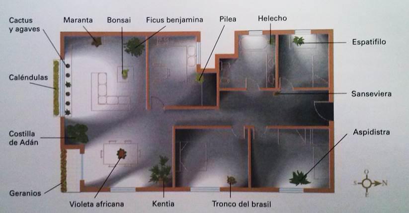 ubicacion-de-luz-en-las-plantas