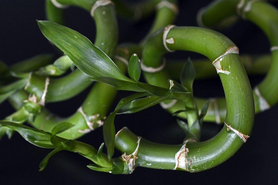 Las mejores plantas para llenar tu hogar de buena vibra for Plantas en el hogar