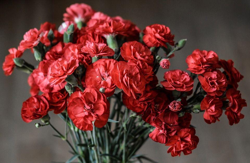 Qué Flores Obsequiar Para Un Aniversario De Boda