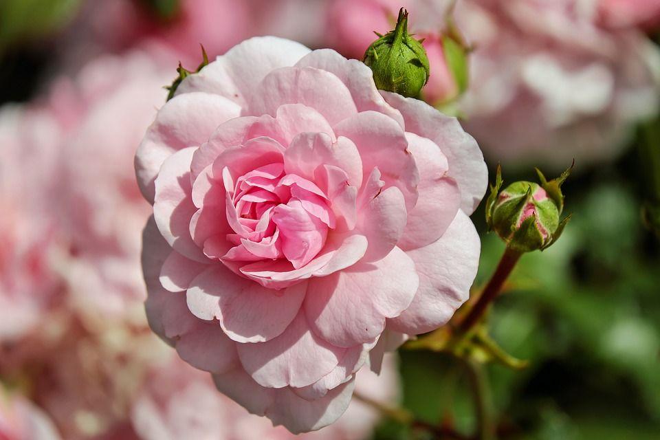 Qué Significa Soñar Con Flores En Lysa Flores Te Lo Contamos