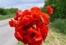 Flores para regalar a un Ariano