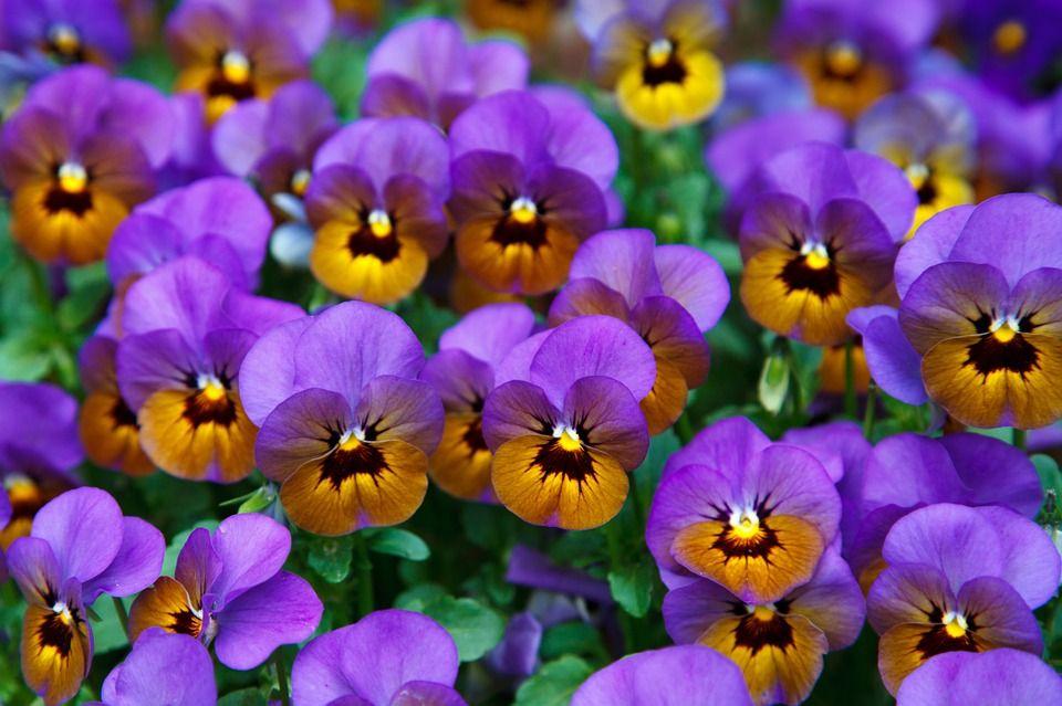 Flores para obsequiar a Capricornio