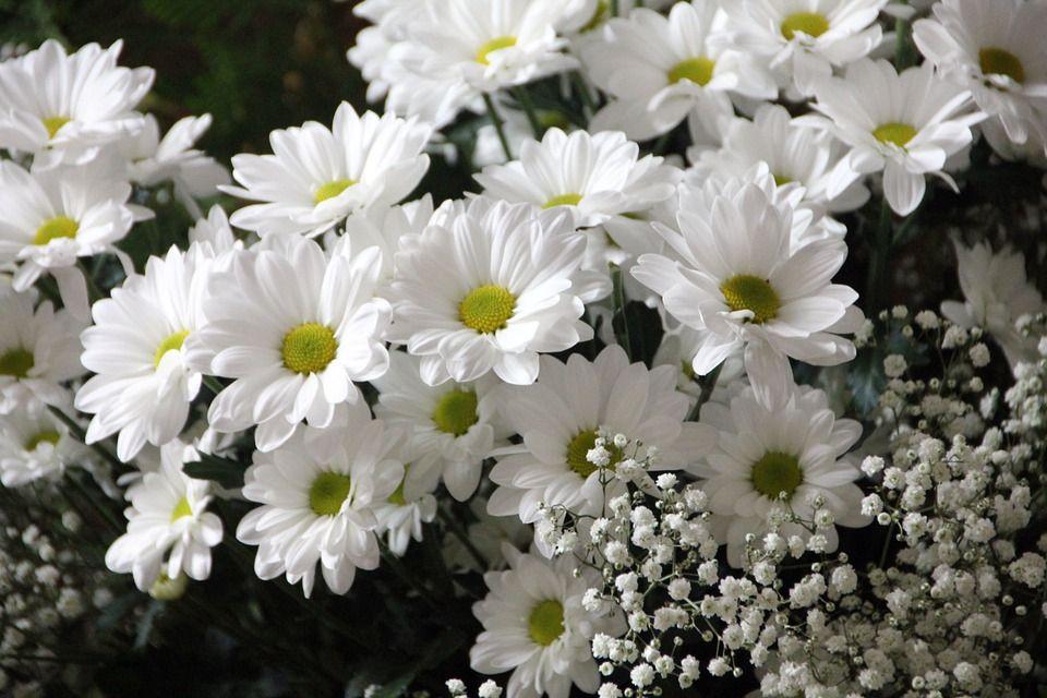 Flores para regalar a Tauro