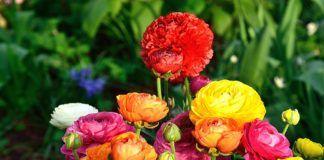 Diccionario de colores de las flores