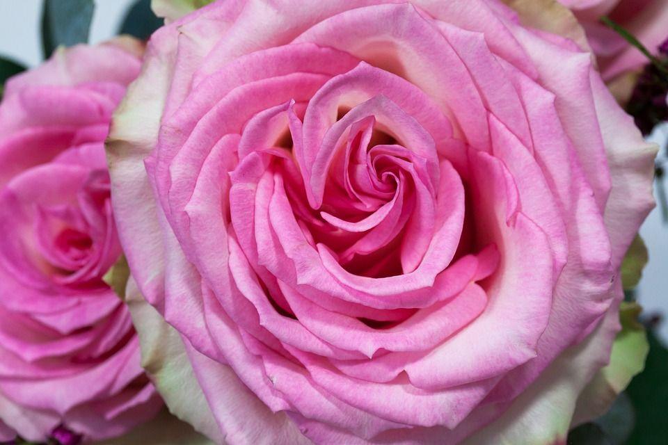 Trucos para cuidar tu ramo de rosas