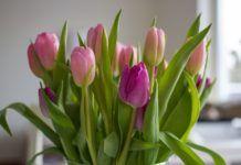 alargar la vida de las flores