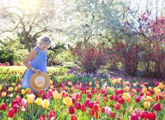 Conoce la leyenda de los tulipanes