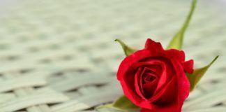 leyenda de las rosas rojas