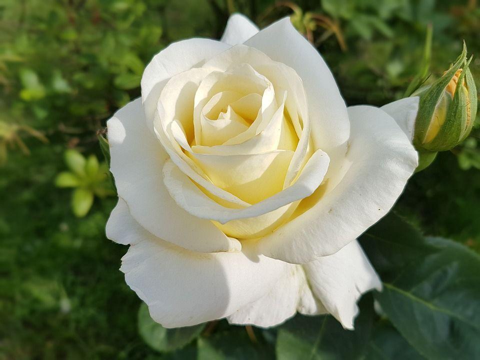 Demuéstrale Tu Cariño A Esa Persona Especial Con Flores Blancas