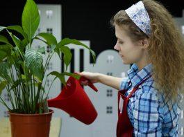 Cómo elegir las plantas y las flores en otoño
