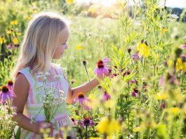 curiosidades sobre las flores