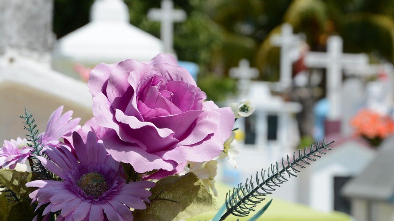 Cuáles son las mejores flores para llevar al cementerio y lo que ...