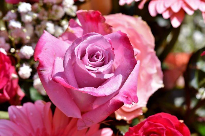 jardines de rosas