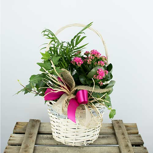 enviar cesta de plantas a domicilio