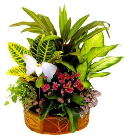 enviar cesta de plantas