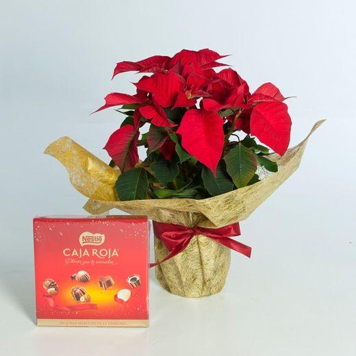 regalar planta navidad con bombones