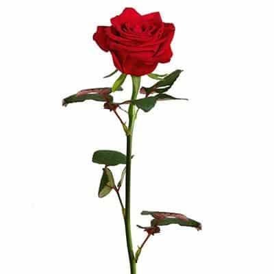 añadir rosas rojas